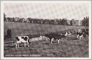 3385 Arnhem Grote Weide Sonsbeek, 1950-08-30