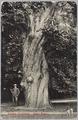 5361 Arnhem-Zijpendaal. Dikke boom, 1909-12-07