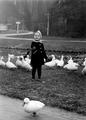 13712 Sonsbeek, 1945-1955