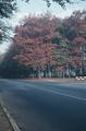 201 Amsterdamseweg, ca. 1980