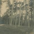 3136 Dennenbosch achter de schoolmeester, 1910 - 1940