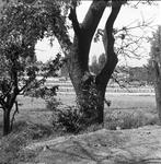 160 Diverse gebouwen, ca. 1960