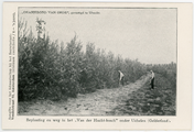 442-0001 Beplanting en weg in het Van der Hucht-bosch onder Uchelen (Gelderland), 1908