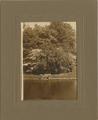 1450 Velp Biljoen, 1900-1920