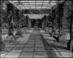 2066 Arnhem Rosarium, 1935