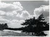 2566 Planken Wambuis, 16-07-1947