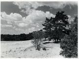 2567 Planken Wambuis, 16-07-1947