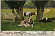 1948 Hemelscheberg Oosterbeek, 1905