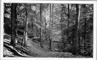 1958 Boschgezicht op het landgoed 'de Vijverberg', 1949