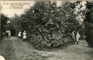 2145 In den tuin van het Instituut 'Berg en Dal' te Oosterbeek, 1910-1915