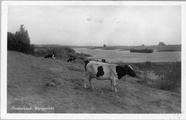 3166 Oosterbeek, Rijngezicht, 1945-1950