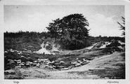 1440 Velp, Zijpenberg, 1900-1940
