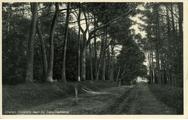 2064 Dieren, Donkere laan bij de Carolinahoeve, 1942-03-21