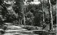 2093 Ellecom, Weg naar de Carolina Hoeve, 1930-1950