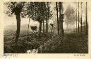 862 Bij Velp?, In de weide, 1930-1940