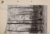 66-0115 PEBREM, 00-00-1952