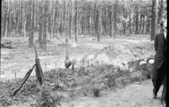 393 Arnhem verwoest, 1940
