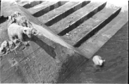 450 Arnhem verwoest, 1940