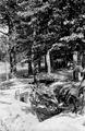 112 FOTOCOLLECTIES - DRIESSEN / RAAYEN, 1945