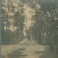 3131 Berkenbos, 1910 - 1940