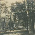 3134 Dennebos achter Krayesteyn, 1920 - 1940