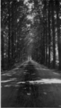 413 Landgoed Biljoen, 1934