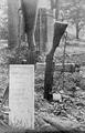 2007 SLAG OM ARNHEM, september 1944