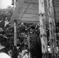 2452 HERDENKINGEN, 17 september 1946