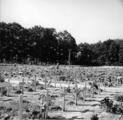 2462 HERDENKINGEN, 17 september 1946