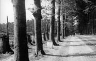 2561 VERWOESTINGEN, 1945