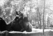 2674 TWEEDE WERELDOORLOG, 1942-1944