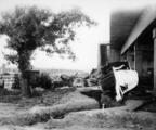 2855 VERWOESTINGEN, 1945