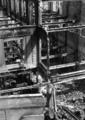 4225 VERWOESTINGEN, 1945