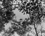 4446 FOTOCOLLECTIES - AIRBORNEMUSEUM, 1945