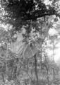 5606 SLAG OM ARNHEM, 17-09-1944 t/m 26-09-1944