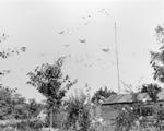 5850 SLAG OM ARNHEM, september 1944