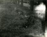 445 WO II, 1945