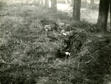 447 WO II, 1945